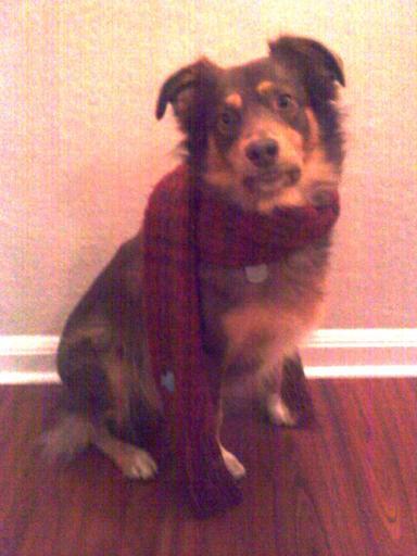 Christmas 2010: Zeke develops an interest in fashion