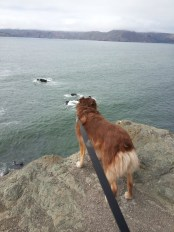 Land's End, SF: Looking out on the Pacific toward Marin