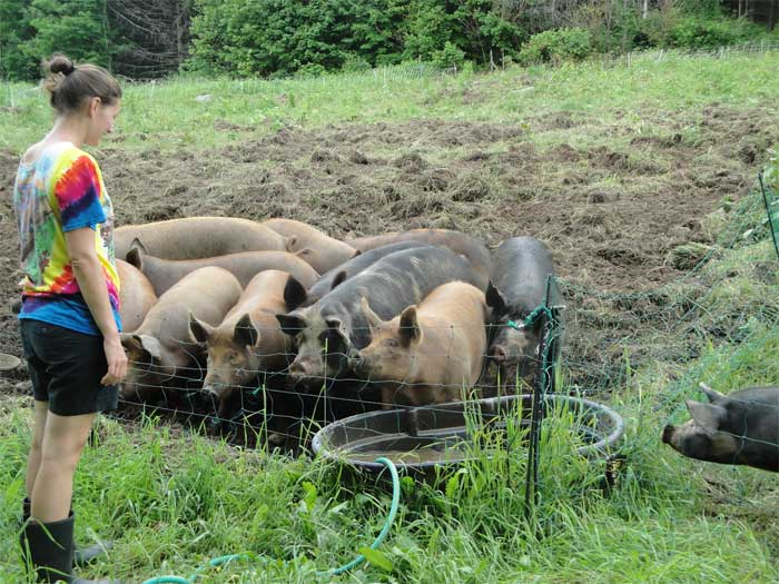 Michaela getting her pig water and feed on