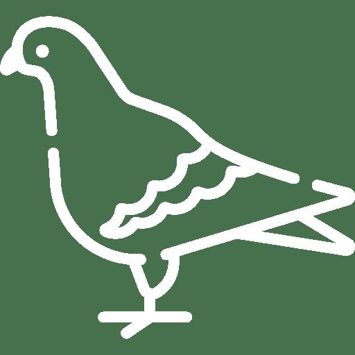 Taubenabwehr Nürnberg