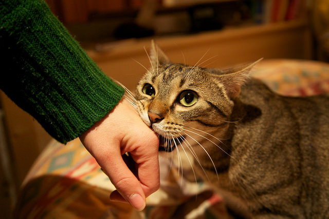 9 Tips To Stop Your Cat From Biting