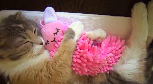 This Cat Can T Go To Sleep Without Snuggling Her Stuffed Bunny