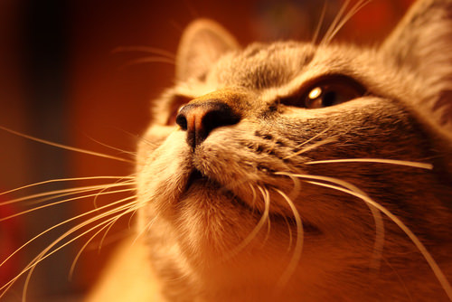 5 Cool Facts About Your Cat S Whiskers