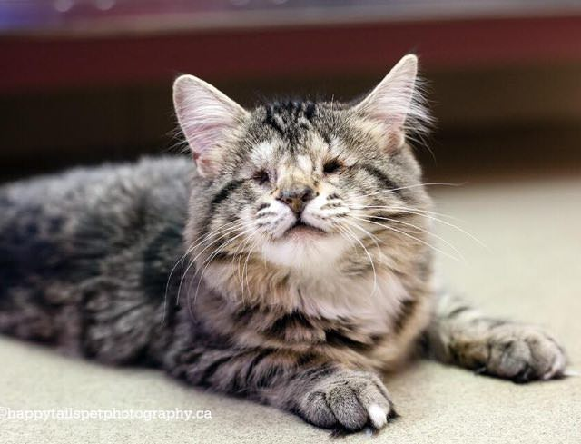 Very Cute Hello Kitty Wallpaper Abandoned And Blind With No Eyes This Cat Finds Hope And A