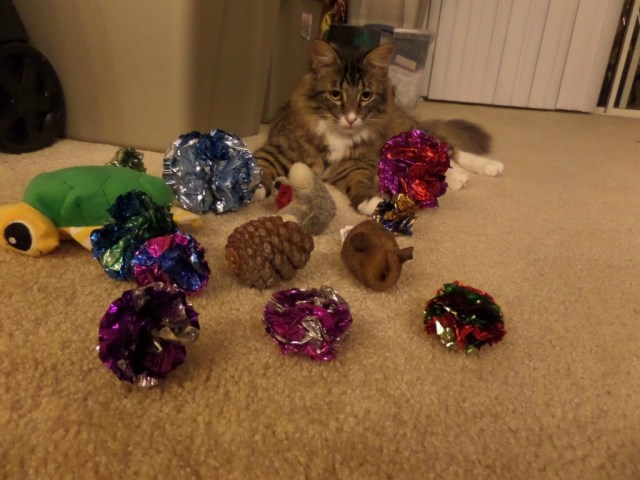 cat and toys