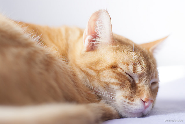 7 Facts About Your Cats Sleeping Habits