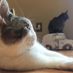 Kitchen Update Ideas The Honest Com Cat With Cleft Palate & One Nostril Has Loving Parents Who ...