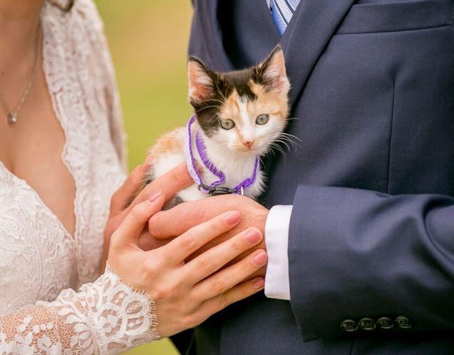 kitten surprise
