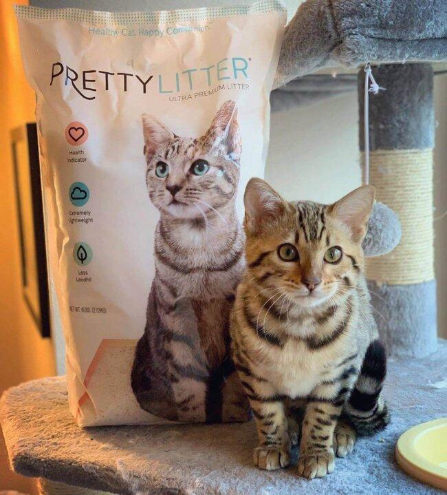 Cat Sitting by PrettyLitter