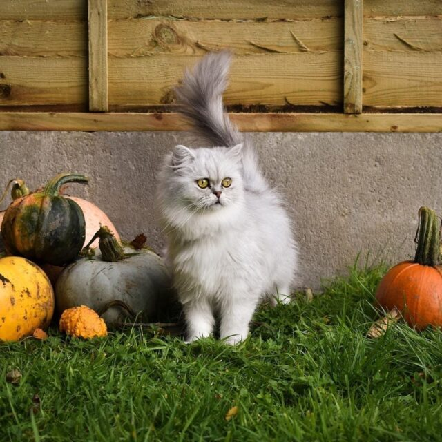 halloween safety cats