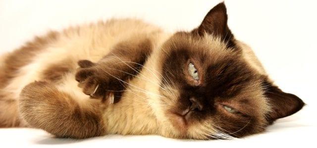¿Cómo dicen los gatos que no se sienten bien?