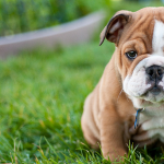 21 Dog Breeds That Have The Cutest Puppies Ever