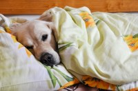 5 Reasons Sharing Your Bed With Your Dog Is Awesome ...