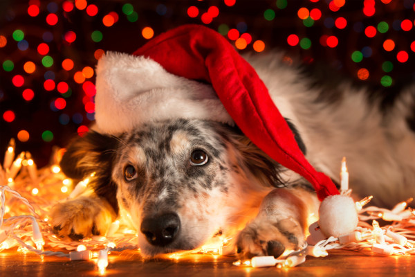 10 Presents Your Dog Must See On Christmas Day