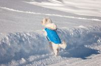 Ask A Vet: Should My Dog Wear A Coat In Winter?