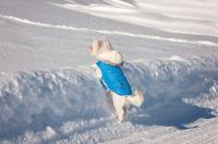 Ask A Vet: Should My Dog Wear A Coat In Winter?