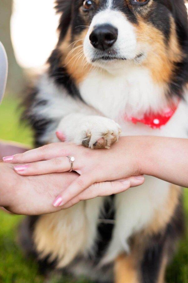 Dog Wedding Photobomb