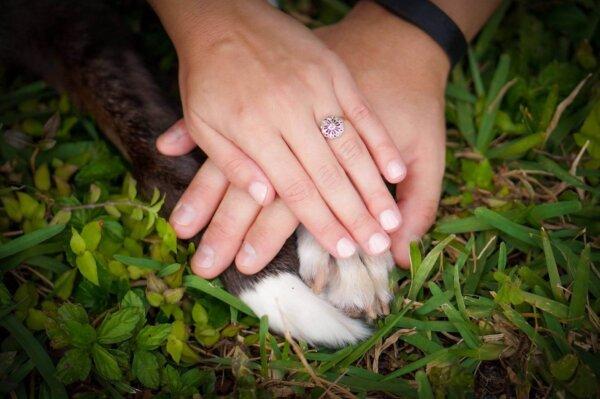 Beautiful Dog Wedding Photo