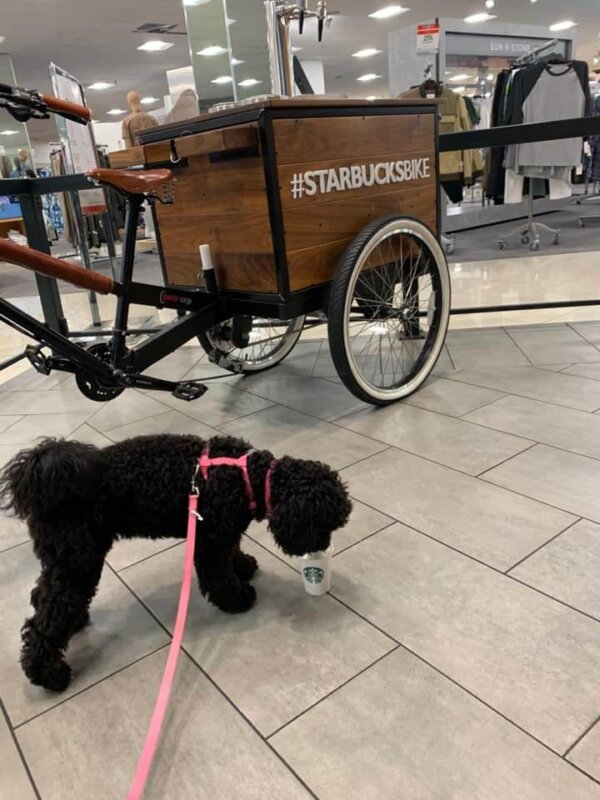 Dog Eating Puppuccino