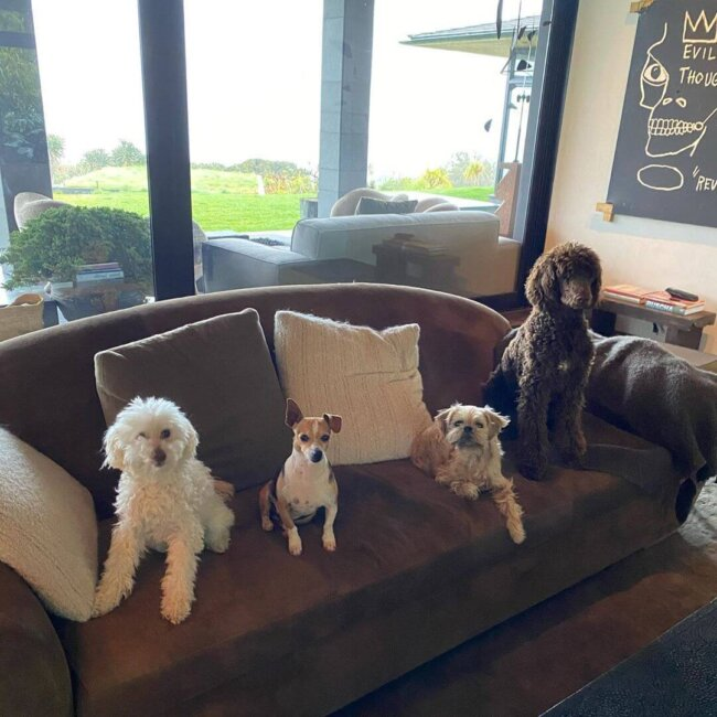 Four dogs on couch