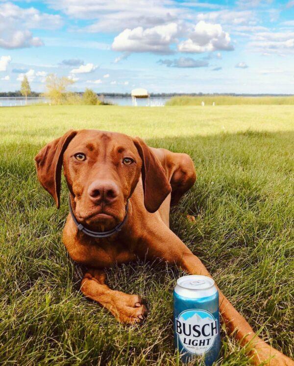 Dog Holding Beer