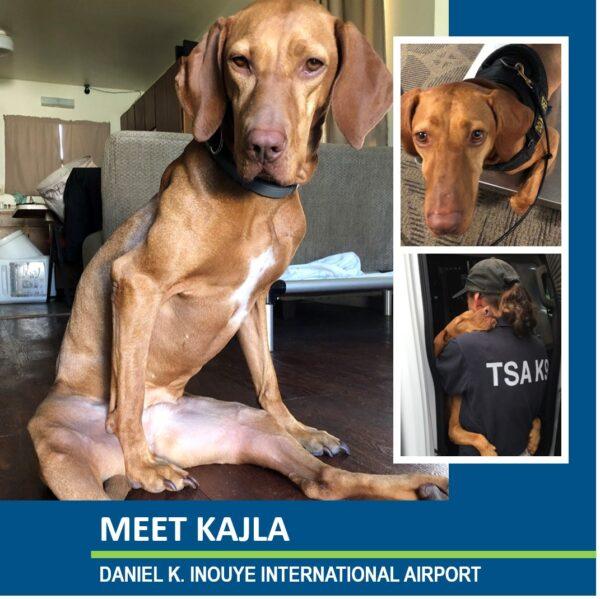 TSA Dog Kajla