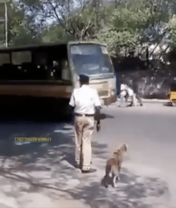Traffic Cop and Dog