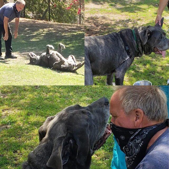 Mastiff Reunited with Human