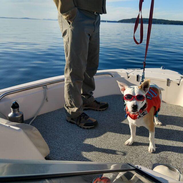 Dog boating