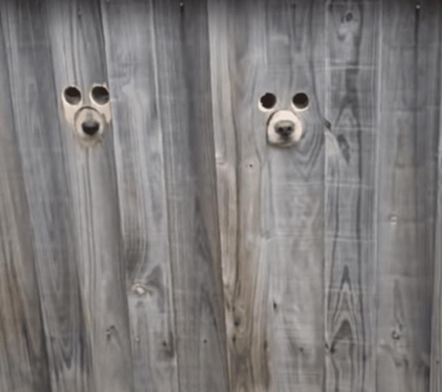 Dog peepholes