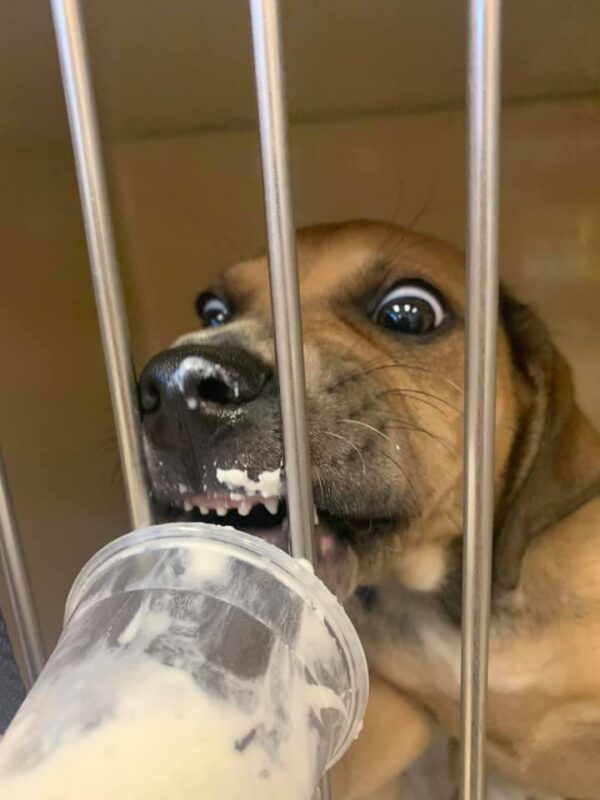 Hungry shelter dog