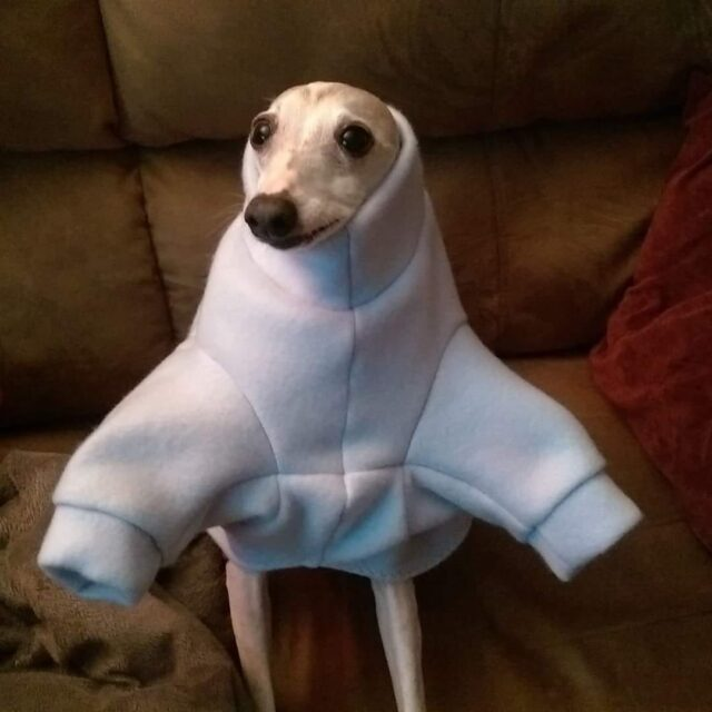 Unflattering dog outfit