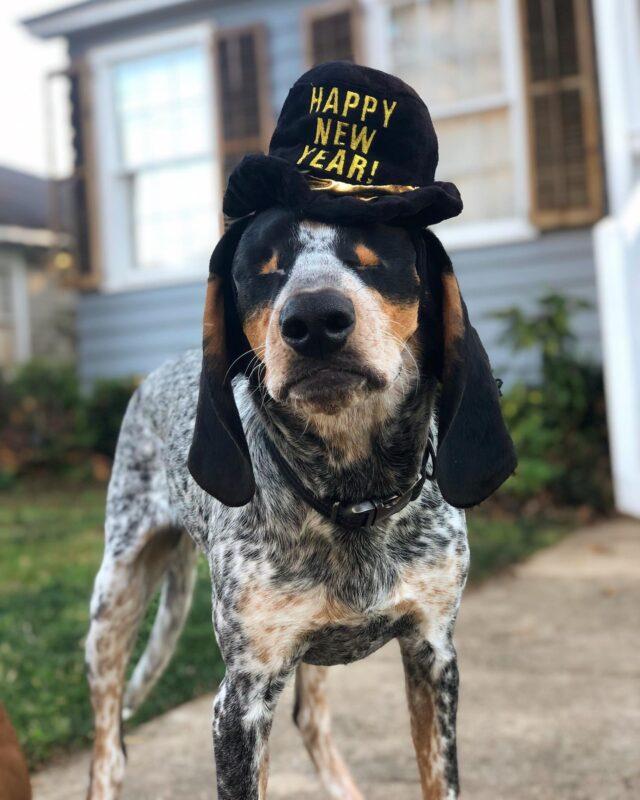 Blind dog happy new year