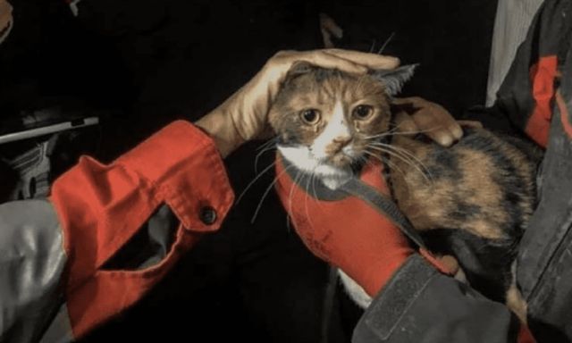 Cat Rescued from Rubble
