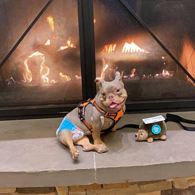 Special Needs Puppy by Fire