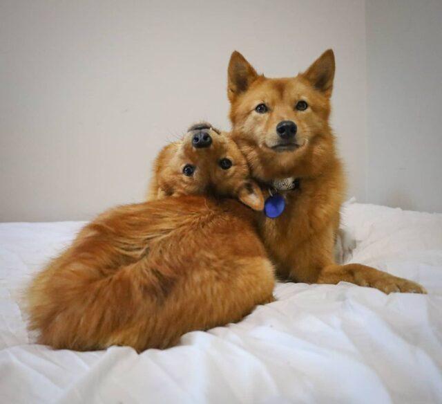 Cuddly Exorcist Dog