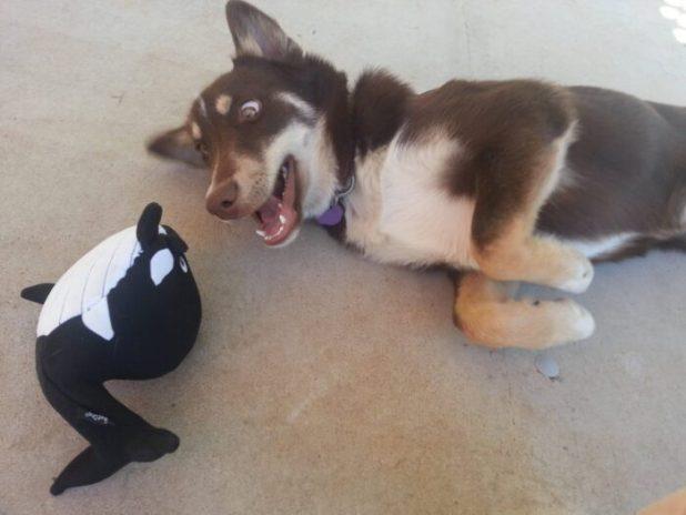 Dog new toy
