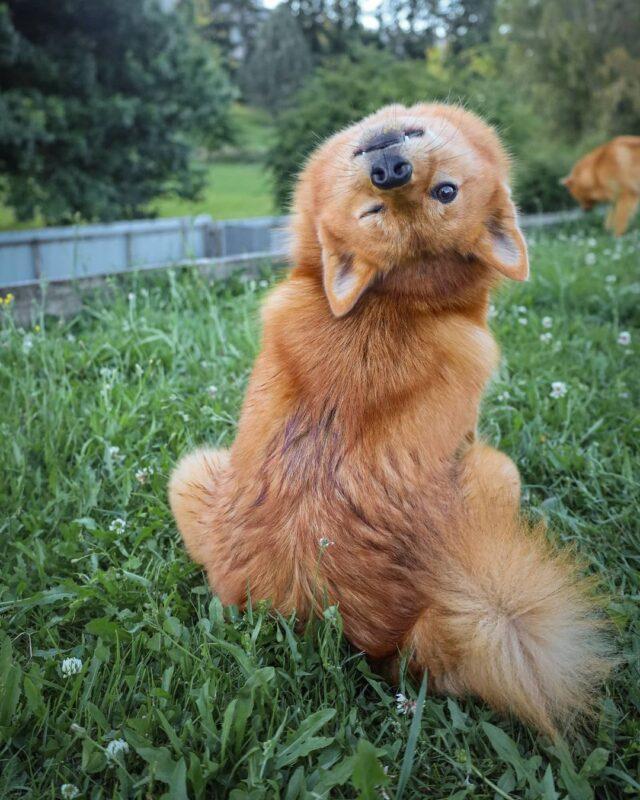Exorcist Dog Wink