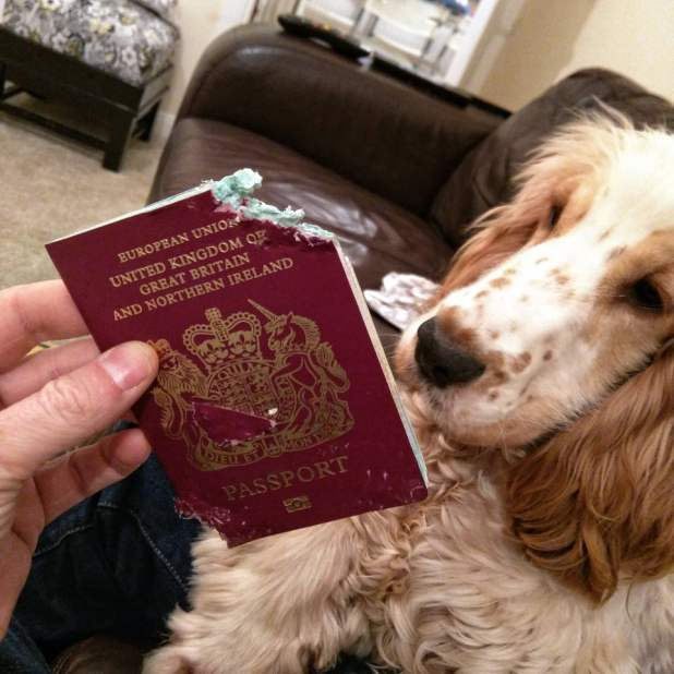 bad-dog-ate-passport