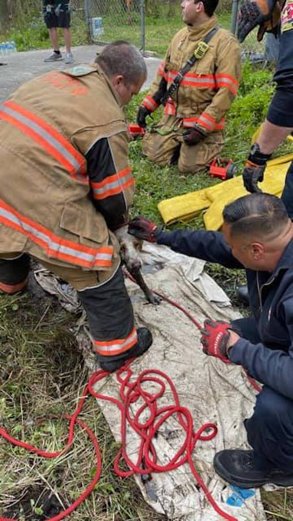 Dog rescued from drainage pipe
