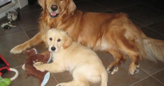 Pups Together