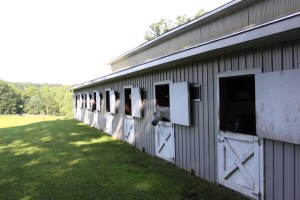 Ivy Rock Farm
