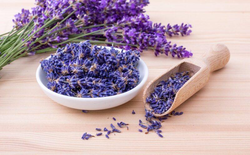 Lavender Herbs Flowers