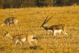 Satpura National Park