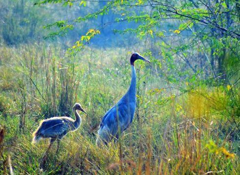 Dr. Salim Ali Bird Sanctuary, Goa: How To Reach, Best Time & Tips