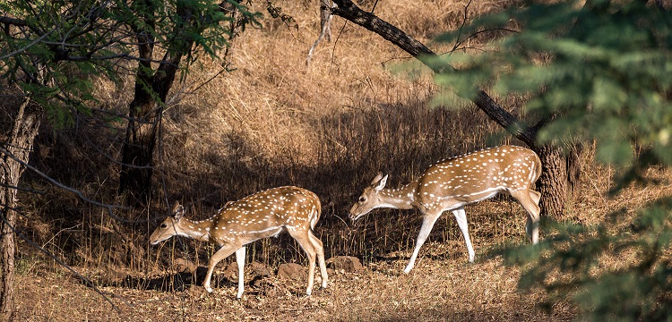 Barda Hills Wildlife Sanctuary Gujarat