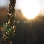 This-Silent-Breeze-Cover-300x300 Gone In 60 Seconds - A-Z - False Awakening