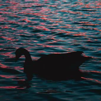Solarein – Adrift
