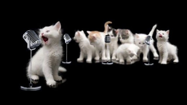 songs about cats e1568752297270 1280x720 1