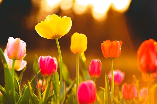 Primavera en Alemania